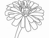 Coloring Pages Zinnia Easy sketch template