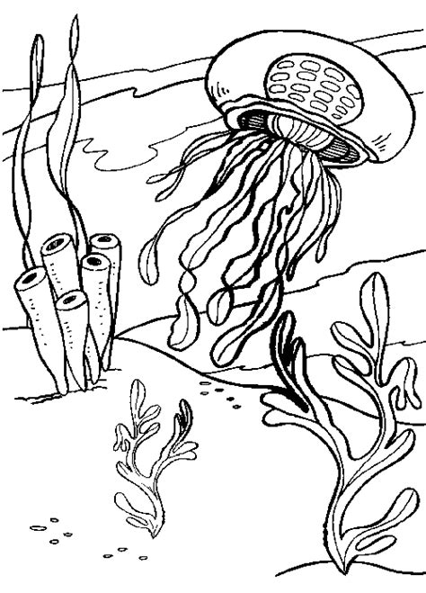 jellyfish colouring page coloring pinterest