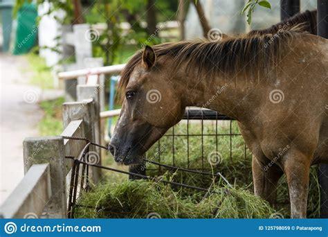 ungulate toed odd horse mammal belonging tax