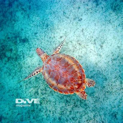 Turtles Wallpapers Tablet Tablets Divemagazine