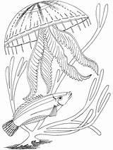 Coloring Ocean Pages Fish Underwater Printable Adult Animals Under Sea Animal Jellyfish Oceans Primarygames Medusa Scene Science Creatures Getcoloringpages Malvorlagen sketch template