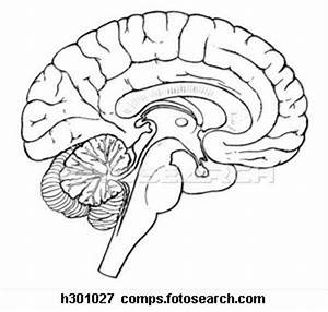 Brain Diagram Blank