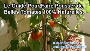 Comment Tuteurer Les Tomates : comment faire pousser de belles tomates 100 naturelles ~ Melissatoandfro.com Idées de Décoration