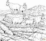 Coloring Mountain Pages Goats Goat Billy Mountains Herd Rocky Gruff Printable Realistic Clipart Drawing Supercoloring Adult Hills Adults Three Animals sketch template