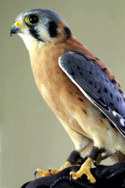 pennsylvania bird identification trails com
