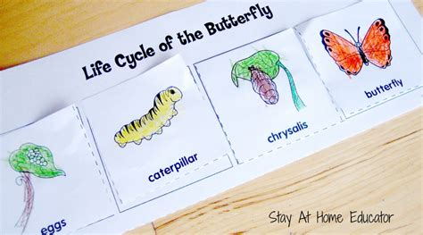butterfly life cycle for preschool bugs and butterfies theme preschool activities 723