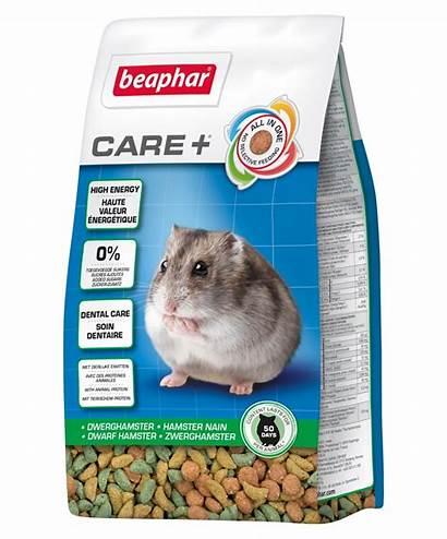Hamster Dwarf Care Hamsters Beaphar Nourriture Nain