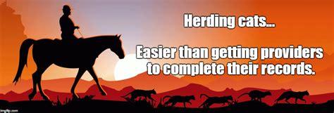 Herding Cats Meme - herding cats meme 100 images buribalek herding cats herding cats memes imgflip uniting