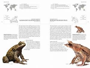 The Book Of Frogs  A Life-size Guide To Six Hundred Species From Around The World