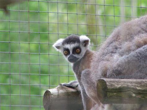 animals ontario zoos around ont eastern
