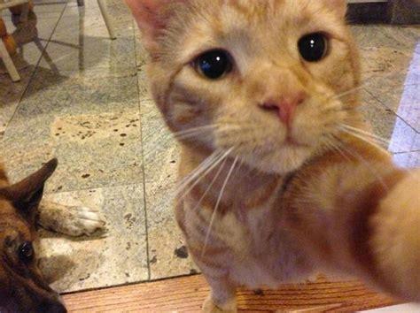 cute animal selfies xcitefunnet