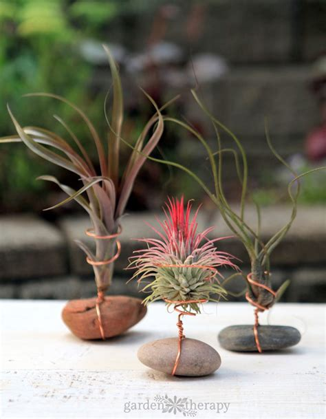 air plants watering crafting with air plants and wire garden therapy howldb