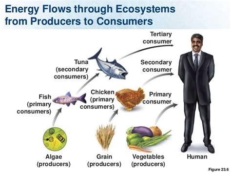 Examples Of Producers And Consumers In An Ecosystem