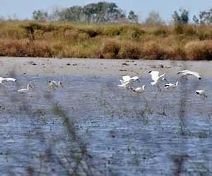 Migratory Bird Habitat Initiative a success for Chambers ...