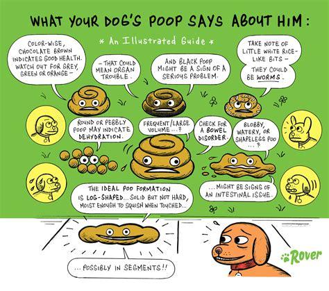 Normal Poop Color Chart Related Keywords Normal Poop