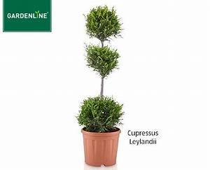 Aldi Solarleuchte Kugel : angebot aldi s d gardenline pflanze im formschnitt ~ Buech-reservation.com Haus und Dekorationen