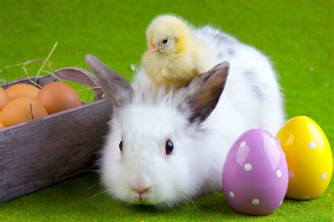Animated Easter Bunny Wallpaper - easter animations free 9to5animations