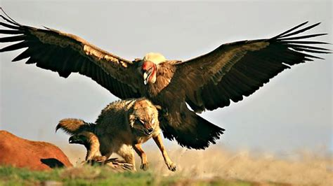 These Are 10 Most Terrifyingly Huge Birds