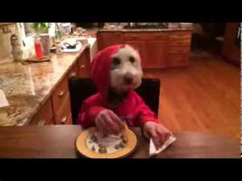 dog eating at table funny dog luna with human hands eating at the table youtube
