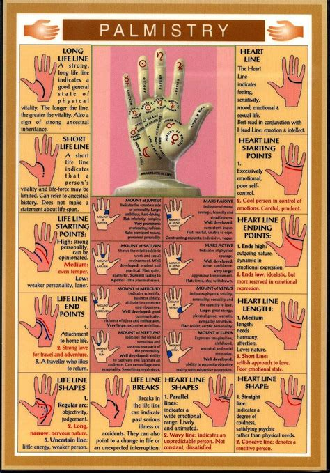The Cupwa A Beginners Guide To Palmistry