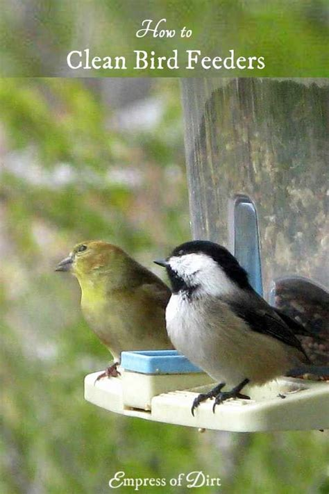 how to clean bird feeders bird feeder bird and gardens
