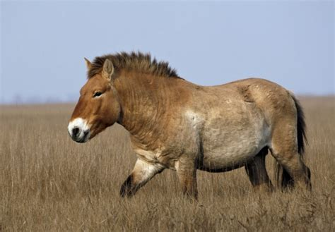 extinct most horses virtually species valuable almost