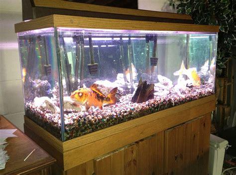 memelihara ikan aquarium  tidak mati
