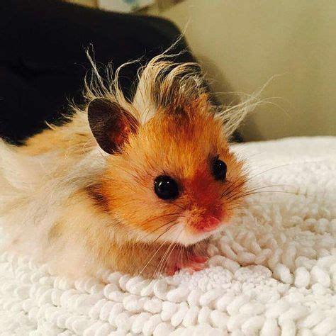 La zoophilie est un sujet fascinant qui n'est jamais abordé en dehors des tribunaux, des comités d'éthique et des rubriques de faits divers. Baby hamster has a bad hair day. LoL | Animaux | Animaux ...