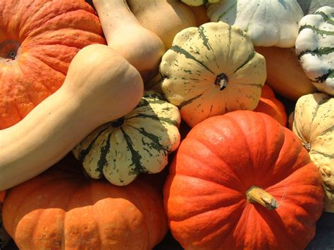 fall vegetables vegetables fruit in season october grocery trends 2012 southern savers