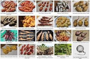 Root Vegetables  U2013 General Storage And Planting