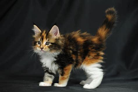 Pin Katter-kattbilder-katt-bilder-katterianse on Pinterest