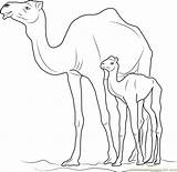 Camel Coloring Kid Template sketch template