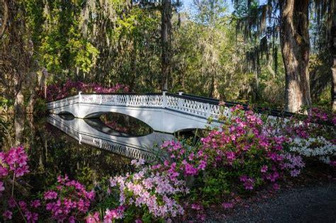 magnolia plantation and gardens magnolia plantation and gardens charleston south carolina sc