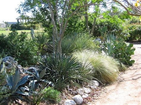 Goundscape Solutions Native Texas Plants; Xeriscape