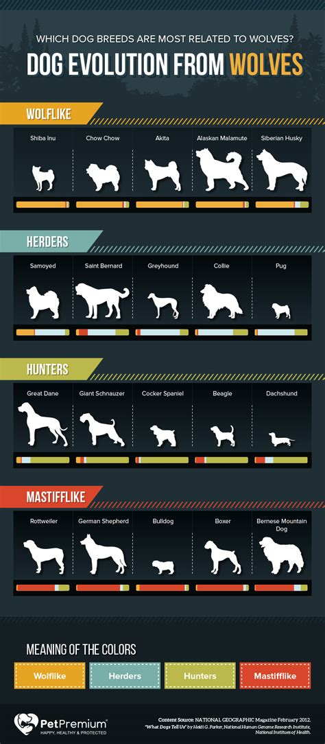 wolf  dog breeds breeds center petpremium