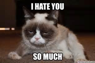 New Grumpy Cat Memes - grumpy cat hates you