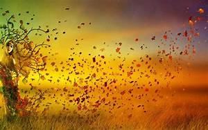 Autumn Sunset HD desktop wallpaper : Widescreen : High ...