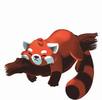 Panda Clipart Transparent Roblox Fandom Fury Looking