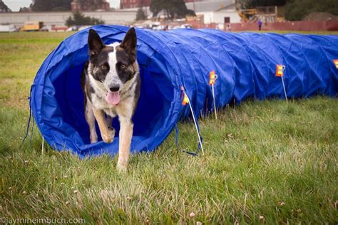 create  dog agility   home mnn mother