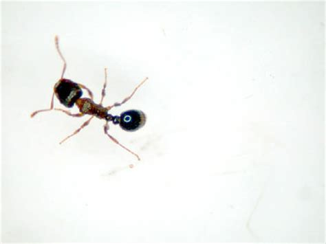 Ants Pest Control Orange County: Costa Mesa, Newport Beach