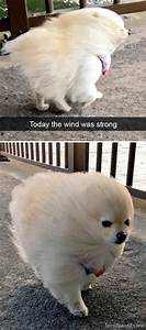 18 snapchats that will make you laugh out loud part 2