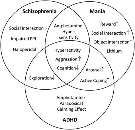 Diagram Of Adhd by Distinction And Overlap Of Endophenotypes Characteristic