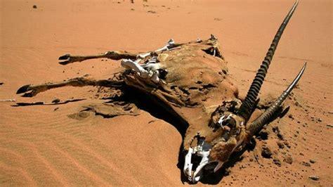 risk  drought hit namibia fbc news