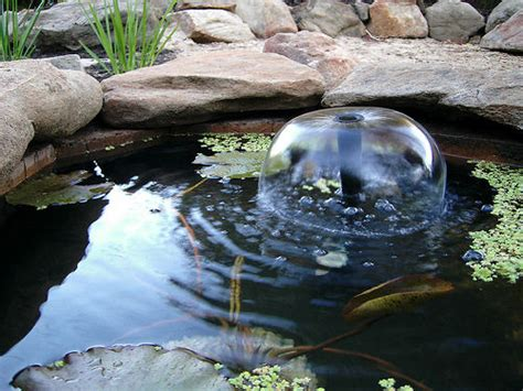 Build Backyard Pond by How To Build A Fish Pond Or Garden Pond 6 Steps