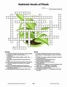 99 Best Grade 5 Botany Images On Pinterest