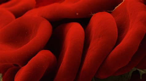 what color is blood inside the toting blood cells could vanquish allergies and
