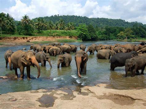 elephant tub india the 12 most beautiful spots in sri lanka