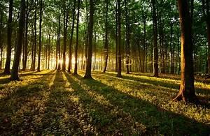 Foret Pour Bois : investir en usufruit des bois et for ts ~ Edinachiropracticcenter.com Idées de Décoration