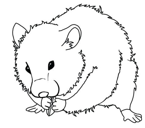 Hamsters are short, stocky rodents with an abundance of loose skin. Hamster Coloring Pages - Best Coloring Pages For Kids | Animal coloring pages, Halloween ...