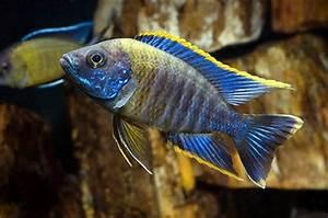 Fresh Water Fish s ly At Feldman s Aquarium